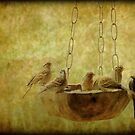 Chipping Sparrows by DottieDees