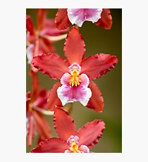 Pink and Red Orchid Photographic Print