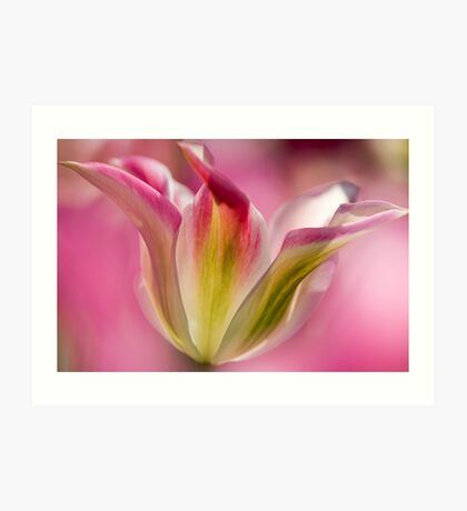 Green and Pink Tulip Art Print