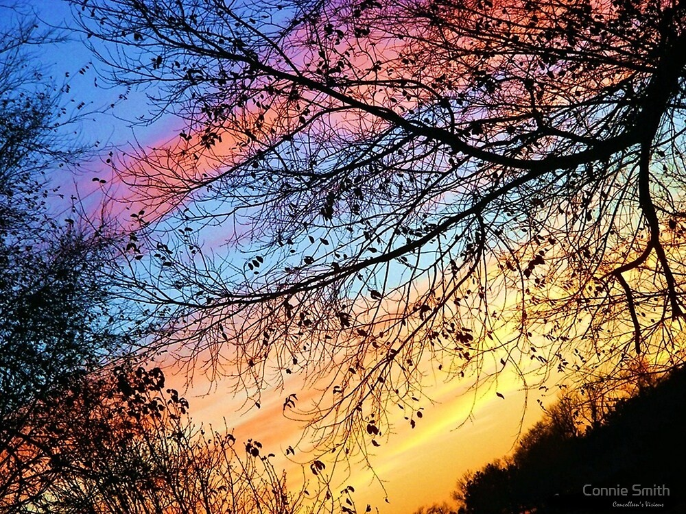 Morning in Color by Connie Smith