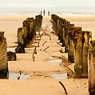 Into the Sea by Paul Berry