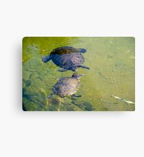 Turtle Conversation - Hong Kong Park Metal Print
