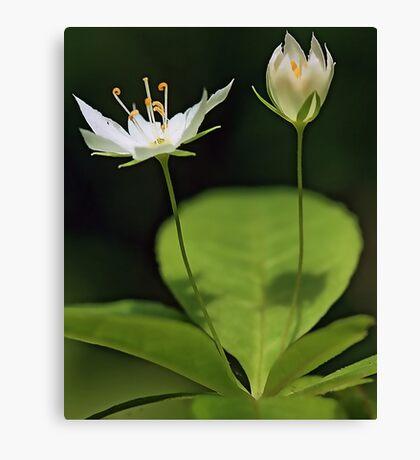 White Starflower Canvas Print