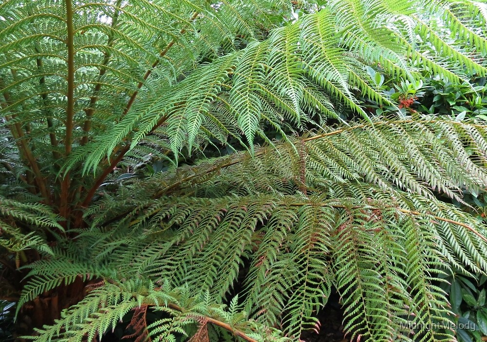 Beautiful Ferns - Lost Gardens of Heligan by MidnightMelody