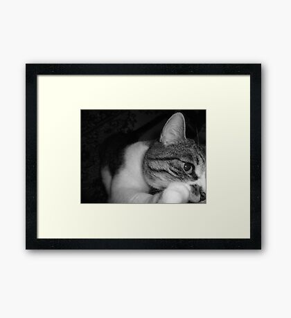 ChewyCat Framed Print