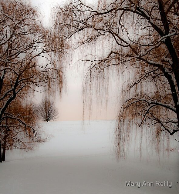 Willows by Mary Ann Reilly