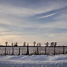 The Fence Line by jules572