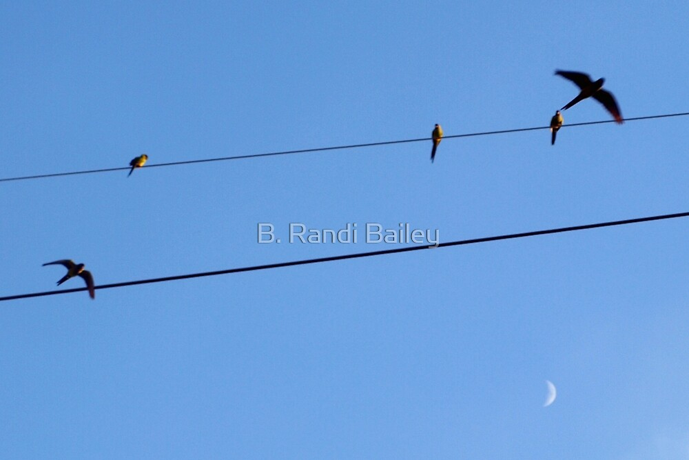 Flying above the moon by ♥⊱ B. Randi Bailey