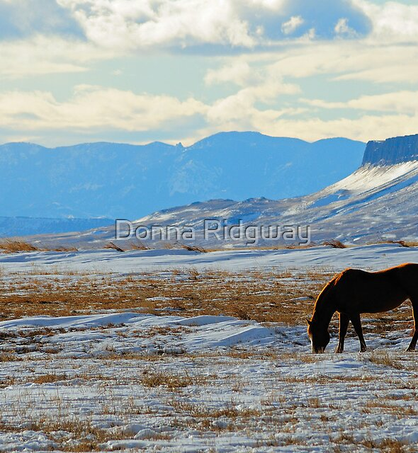 Horse at Square Butte, Montana horse in winter. by Donna Ridgway