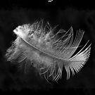 Dark Angel by Alenka Co