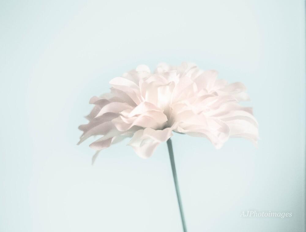 Pale Orange Flower by AJPhotoImages