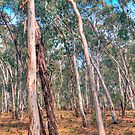Australian Panorama - High Country - Victoria - The HDR Experience                                                    by Philip Johnson
