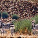 Etendeka zebra pair by Owed To Nature