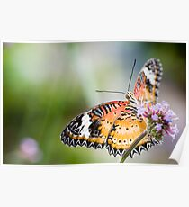 Maylay Lacewing Butterfly Poster