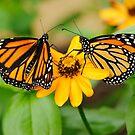 Meet you at the orange flower by Oscar Gutierrez
