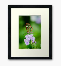 Clear Wing Butterfly   Framed Print