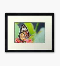 Maylay Lacewing Butterfly Framed Print