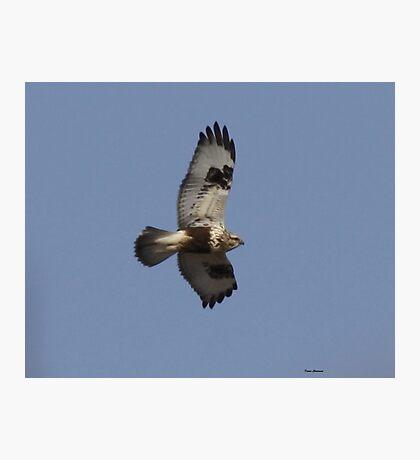 Rough legged Hawk Photographic Print