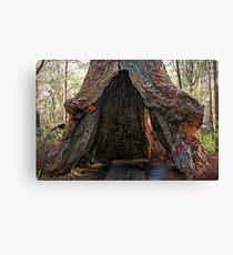 Old Tingle Tree base Canvas Print