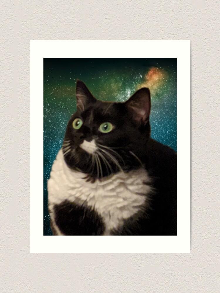 Alternate view of Truth Cat Art Print
