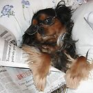 It's Good to be Me! Cavalier King Charles Spaniel by daphsam