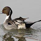 Ducks by Dennis Cheeseman