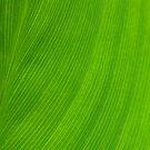 Green by Igor Mazulev