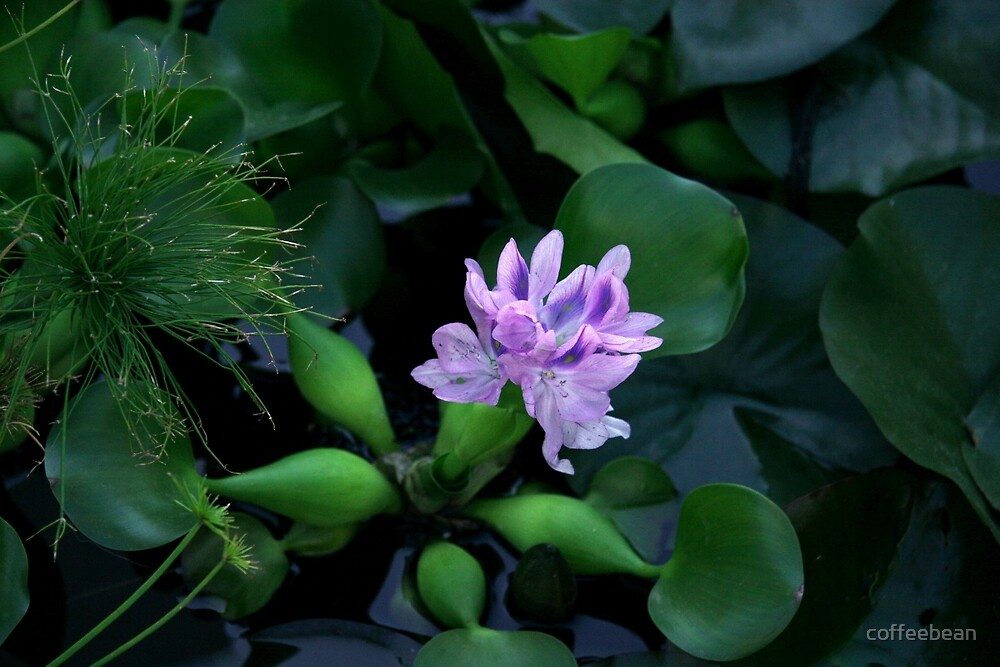 The Lone Flower by coffeebean