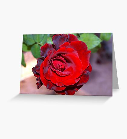 Climbing red rose Greeting Card