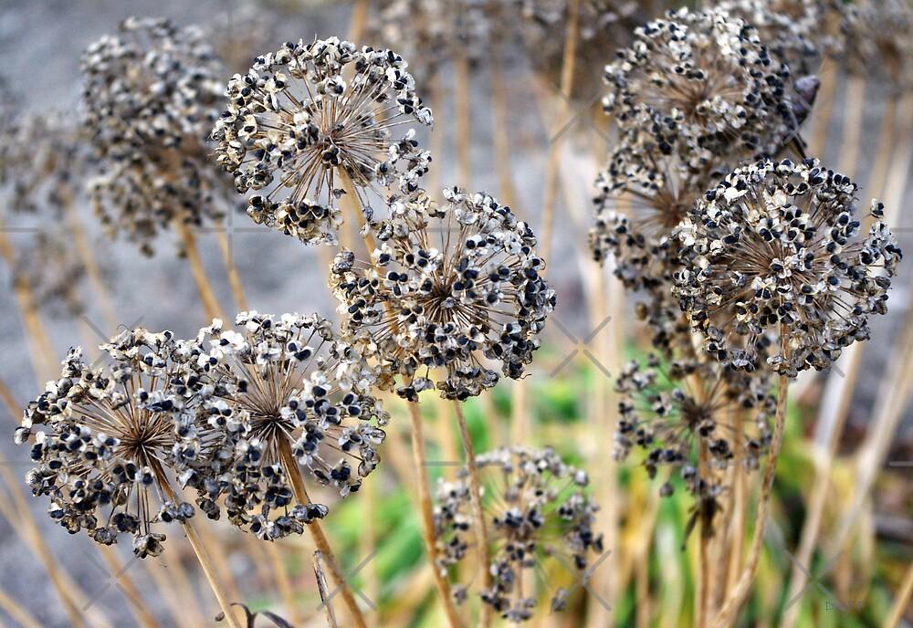 Autumn Spirals by Josie Duff