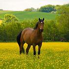 Charingworth, England by Daniel Attema