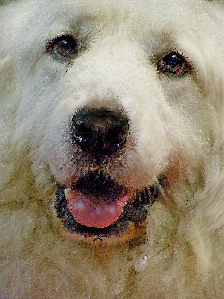 great pyrenees by jashumbert