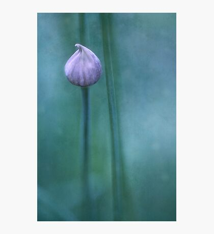 Testolina Photographic Print