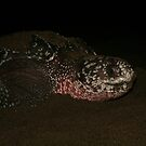 Leatherback Turtle by naturalnomad