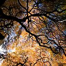 the tree by helveticaneue