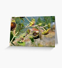 Dare Devil Buffet Greeting Card