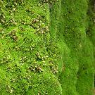 green grass,velvet bed by geoffro13