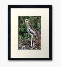 Bush Thick-knee Framed Print