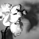 orchids b&w by purpleminx