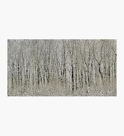 Melodies of the Woods Photographic Print