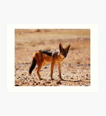 Black-back Jackal... Art Print