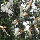 The Roost by byronbackyard