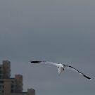 Gull Landing by Lynn Wiles