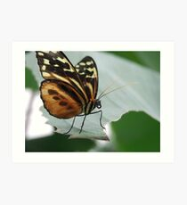 butter fly on leaf Art Print