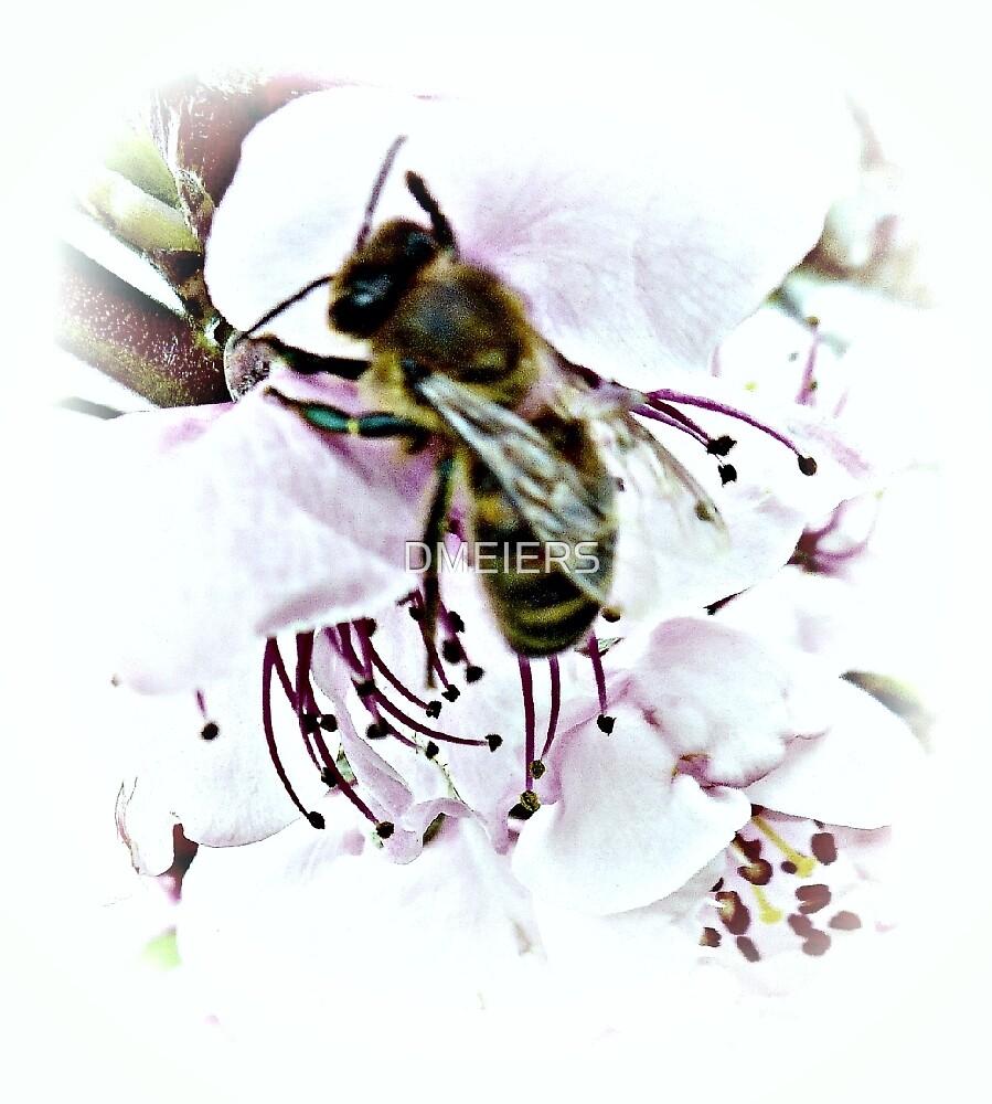 honey bee by DMEIERS