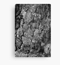 Black and white cracks Canvas Print