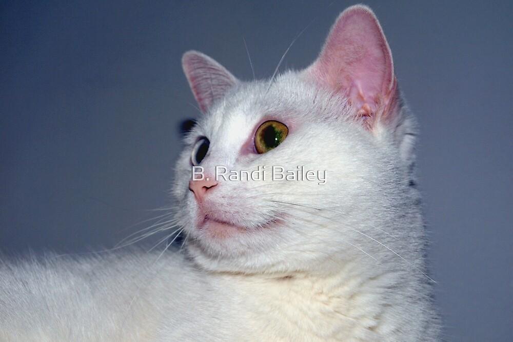 Kitten-like by ♥⊱ B. Randi Bailey
