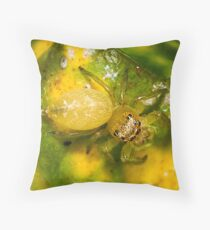 Jumping Spider - Lycidas species Throw Pillow