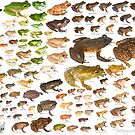 Some Frogs of Madagascar to Scale, Version 1.0 by Dr Mark D. Scherz