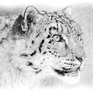 Snow Leopard (Digital Art) by Alain Turgeon